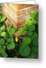 Nasturtium Leaves Greeting Card