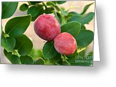 Natal Plums On Branch Greeting Card