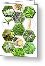 Natural Eco Bio Cosmetics Greeting Card