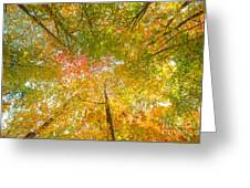 Natures Canopy Of Color Greeting Card