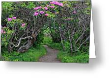 Nature's Tunnel Greeting Card