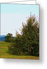 Nc Mountain Apples Greeting Card