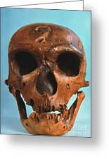 Neanderthal Skull Greeting Card