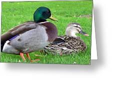 New Zealand - Mallard Ducks Greeting Card