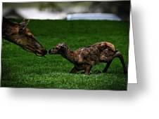 Newborn Elk Greeting Card
