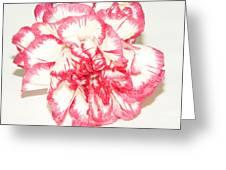 Nice Carnation Greeting Card