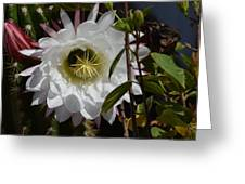 Night Bloomers Greeting Card