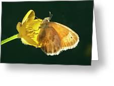 Ochre Ringlet Butterfly Greeting Card