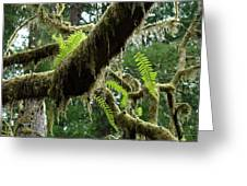 Office Art Forest Ferns Green Fern Giclee Prints Baslee Troutman Greeting Card