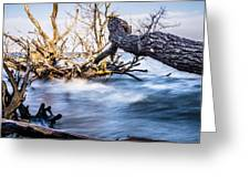 Old Dead Trees On Shores Of Edisto Beach Coast Near Botany Bay P Greeting Card