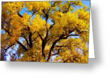 Old Giant  Autumn Cottonwood Orton Greeting Card