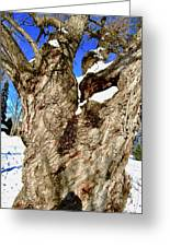 Old Willow Tree Greeting Card