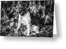 On The Leaves Greeting Card