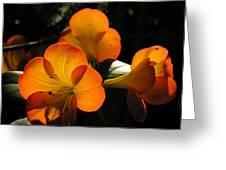 Translucent Greeting Card