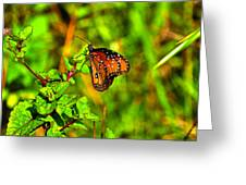 Orange Butterfly Too Greeting Card