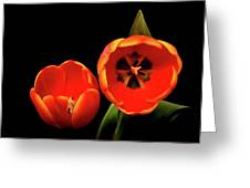 Orange Tulip Macro Greeting Card