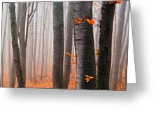 Orange Wood Greeting Card by Evgeni Dinev