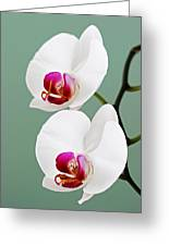 Orchid-2-st Lucia Greeting Card