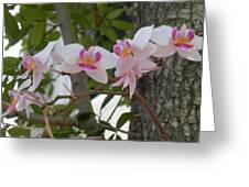 Orchid Bunch Greeting Card