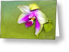 Shy Orchid  Greeting Card