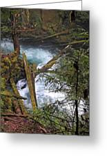 Oregon Stream Greeting Card