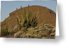 Organ Pipe Cactus Greeting Card