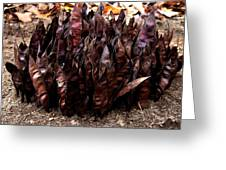 Organize Brown Pods Greeting Card