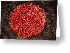 Organize Red Berries Greeting Card