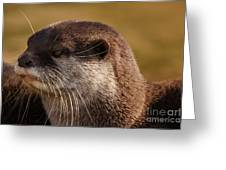 Oriental-small-clawed-otter Greeting Card