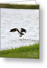 Osprey Fishing In The Afternoon Greeting Card