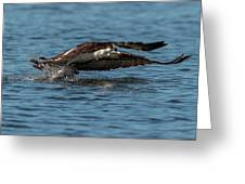 Osprey Fishing Greeting Card