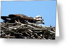 Osprey Pair Greeting Card
