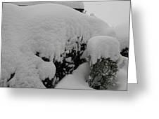 Overnight Snow Greeting Card