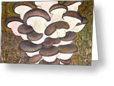 Oyster Mushroom Greeting Card