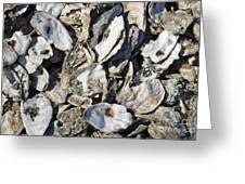 Oyster Shells Greeting Card