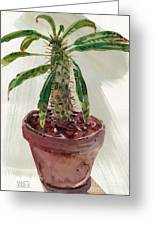 Pachypodium Greeting Card