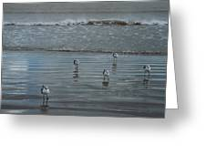 Padre Island Shore Birds Greeting Card