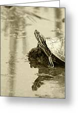 Painted Turtle On Mud In A Marsh Greeting Card