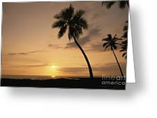 Palm At Sunset Greeting Card