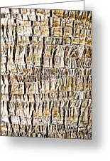 Palm Trunk Greeting Card