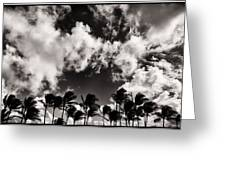 Palms Blowing In The Wind Greeting Card