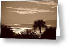 Palms In The Clouds Greeting Card