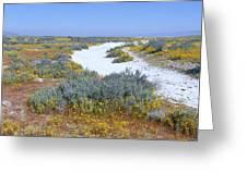 Panoramic View Of White Salt And Desert Greeting Card