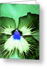 Pansy Power 75 Greeting Card