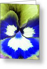Pansy Power 85 Greeting Card
