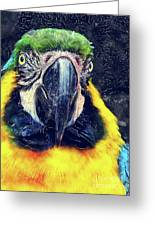 Parrot Art  Greeting Card