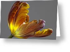 Parrot Tulip 21 Greeting Card