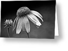Passages Bw Greeting Card by Steve Harrington