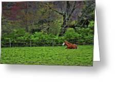 Pasture Napping Greeting Card