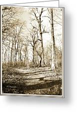 Path In A Forest Greeting Card